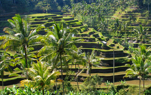 bali-rice-terraces