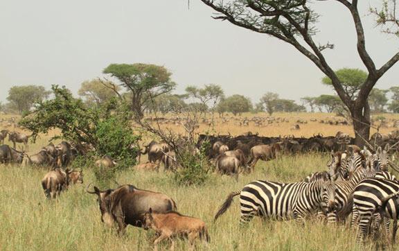 Great Migration Singita