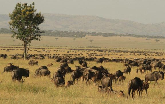 The Great Migration of Singita