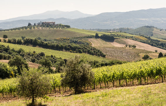 The Tuscan Landscape is an Experience all on its Own